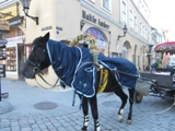 estonia091224_26.jpg
